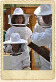 Introduction to Beekeeping Class (single class seat)-04/18/2020